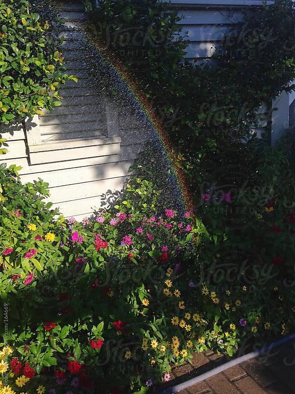 Rainbow among plants by Nicole Mlakar for Stocksy United