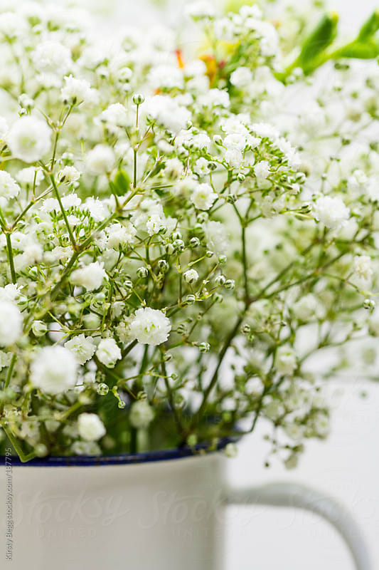 Gypsophila by Kirsty Begg for Stocksy United