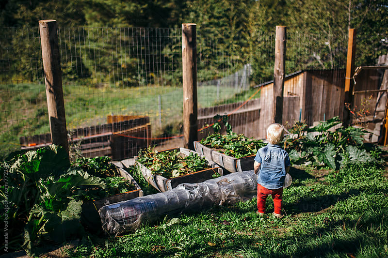 Toddler Boy Stands and overlooks the garden and chicken coop by Amanda Voelker for Stocksy United