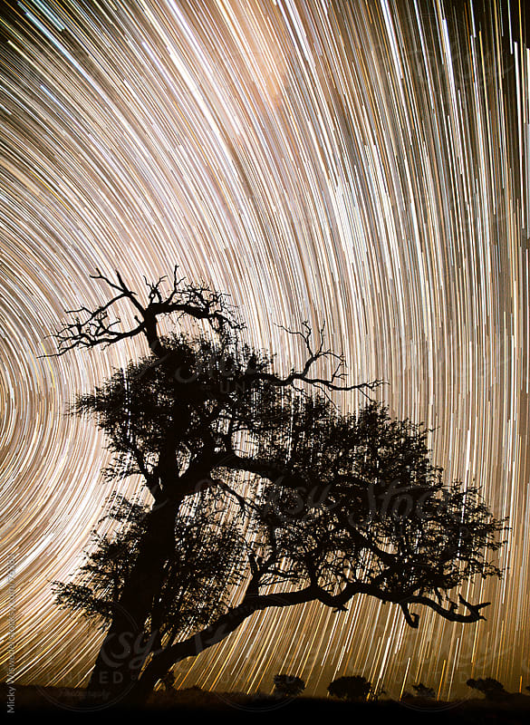 Star trails against an African Tree by Micky Wiswedel for Stocksy United