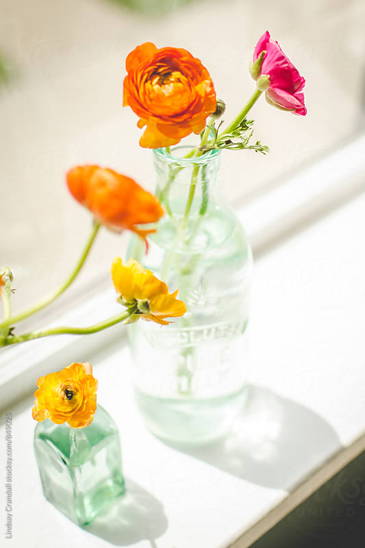 Flowers in vases on a windowsill by Lindsay Crandall for Stocksy United