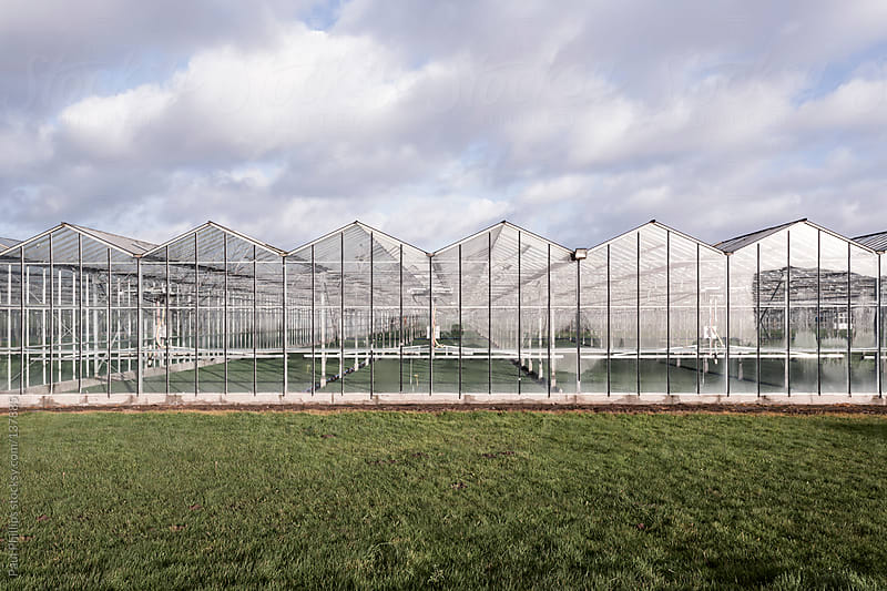 Industrial greenhouses (Glasshouses)  in a line by Paul Phillips for Stocksy United