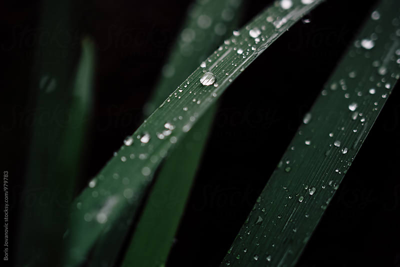 Close up of rain drops on the grass by Boris Jovanovic for Stocksy United