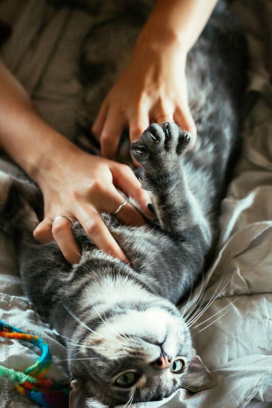 Woman Scratching Belly Of House Cat Lying On Back by Luke Mattson for Stocksy United