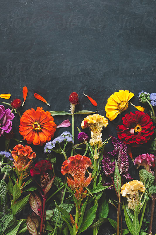vertical image of colorful flowers on chalkboard background by Kelly Knox for Stocksy United