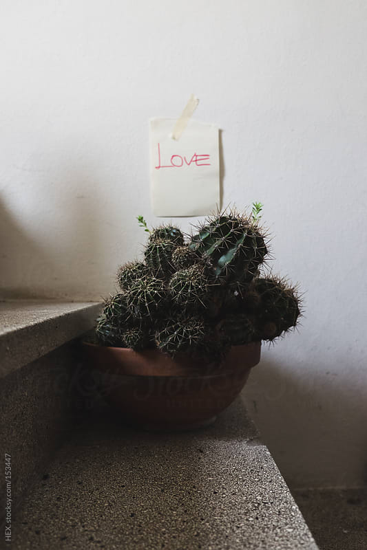 Succulent Plant with Love Sign . Concept by HEX. for Stocksy United