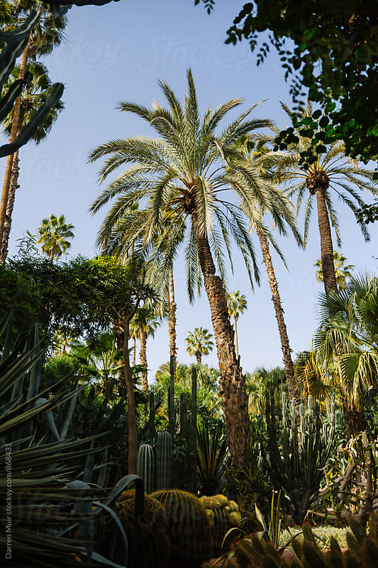 Cactus garden and palm trees in a botanic garden. by Darren Muir for Stocksy United