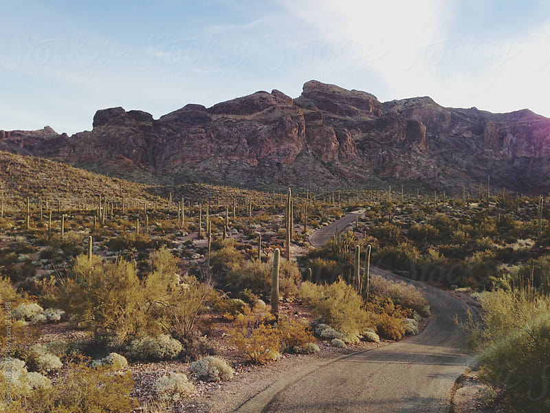 Cactus Road by Kevin Russ for Stocksy United