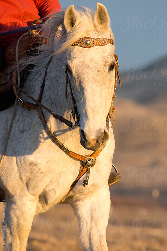 A horse riding into the sun at sunset by Tana Teel for Stocksy United