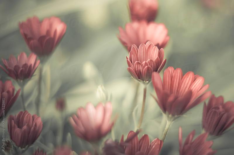Dusty rosed-colored flowers on green  by Rachel Bellinsky for Stocksy United