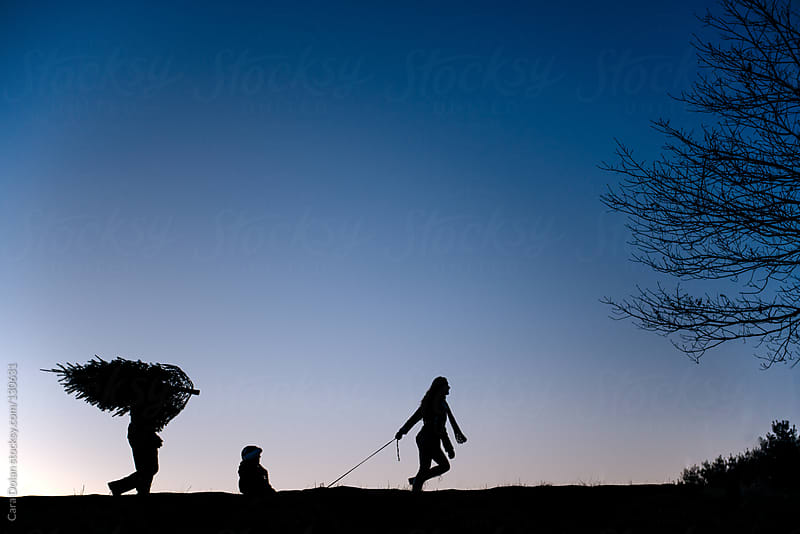 Family walks across a field at sunset with their freshly cut Christmas tree by Cara Dolan for Stocksy United