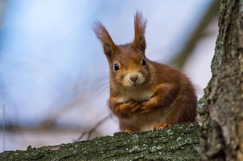 Squirrel by Gabriel Ozon for Stocksy United