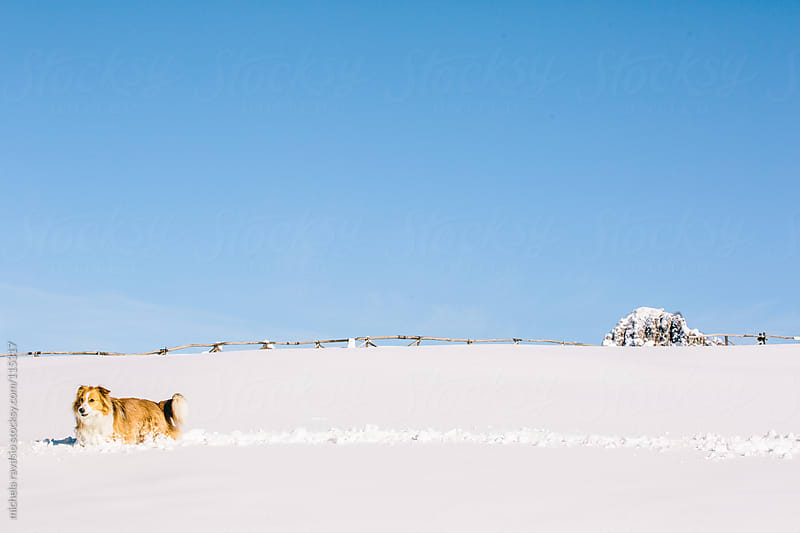 Dog in the snow by michela ravasio for Stocksy United