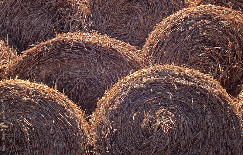 hay straw bales rolled and stacked harvest prairies North Dakota by Ron Mellott for Stocksy United
