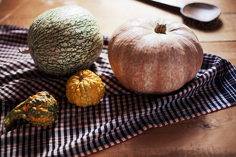 Pumpkin still life. by mee productions for Stocksy United