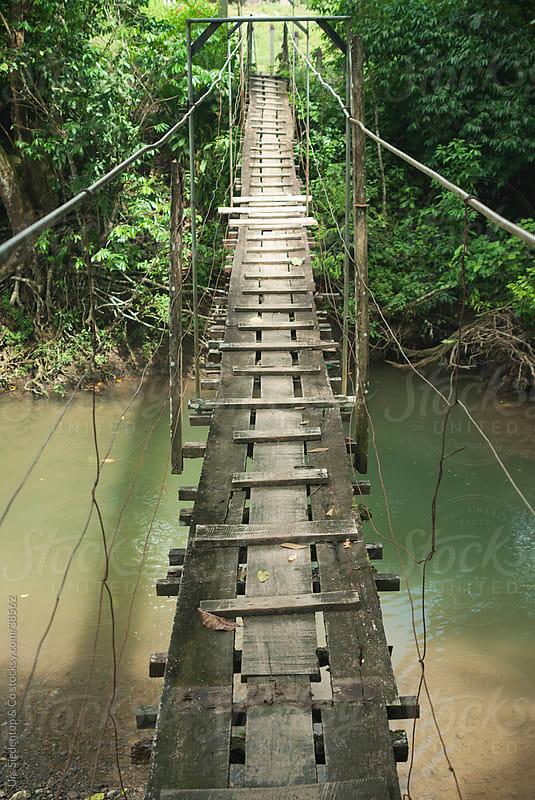 Jungle Bridge by Urs Siedentop & Co for Stocksy United