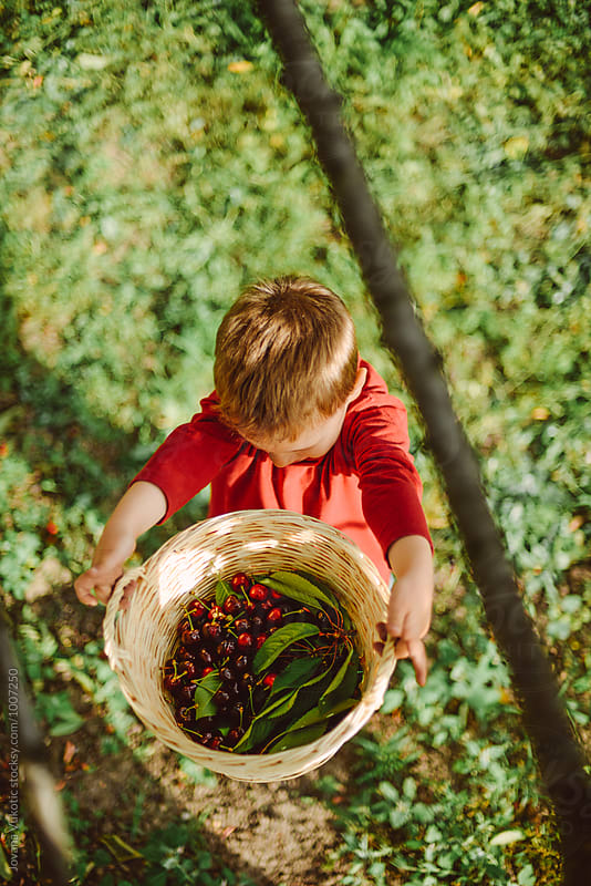 Kid is holding a cherries by Jovana Vukotic for Stocksy United