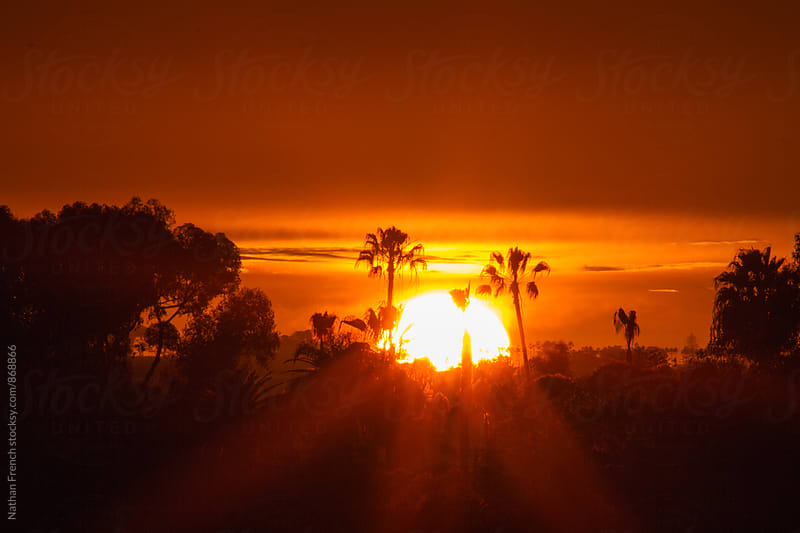 Sunset Between the Trees by Nathan French for Stocksy United