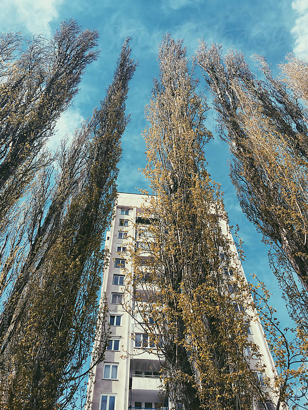 High building with trees around by Maja Topcagic for Stocksy United