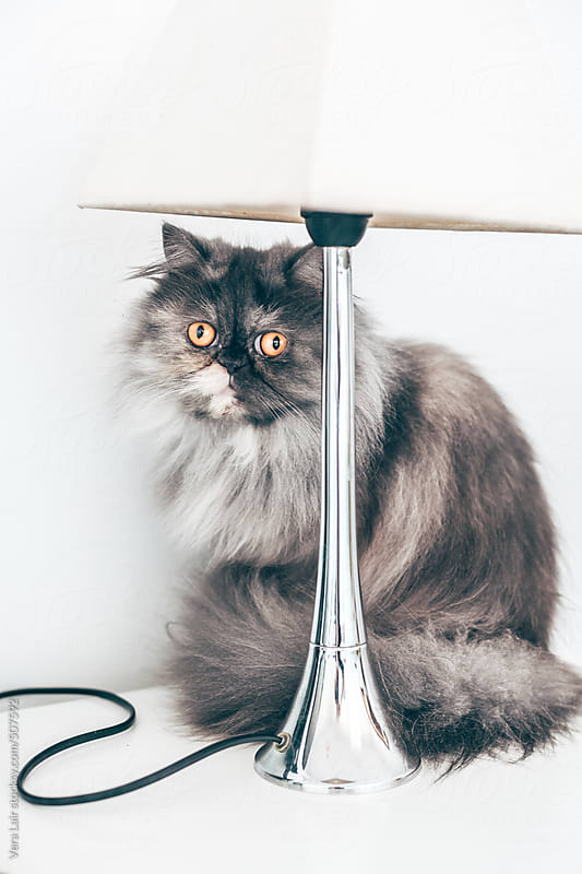 Persian cat hiding under a lamp by Vera Lair for Stocksy United