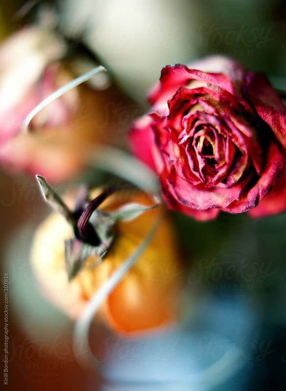 Roses by Kirill Bordon photography for Stocksy United