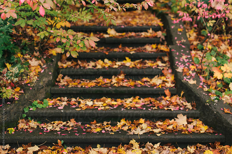 autumn leaves blanketing an old outdoor stairway by Deirdre Malfatto for Stocksy United