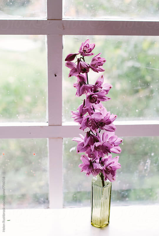 Pink Delphinium flowers in an antique bottle in front of a window. by Helen Rushbrook for Stocksy United