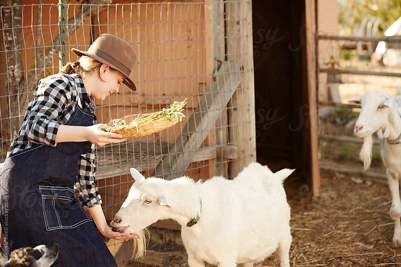 Woman farmer feeding her goats on organic farm by Trinette Reed for Stocksy United