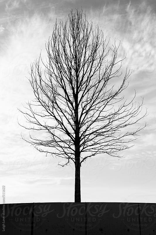 Tree Silhouette in Winter by Leigh Love for Stocksy United