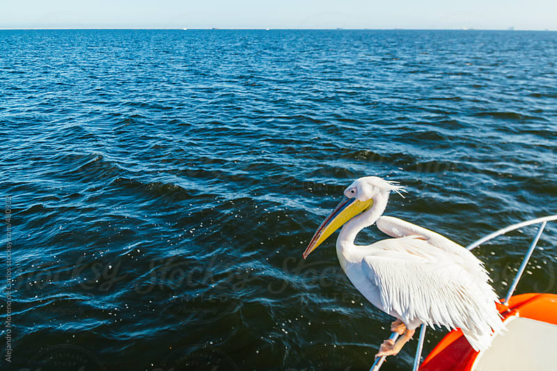 Pelican on the deck of a boat sailing on blue sea by Alejandro Moreno de Carlos for Stocksy United