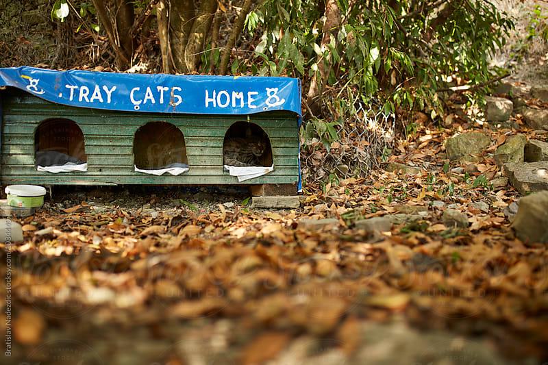 Cats house by Bratislav Nadezdic for Stocksy United