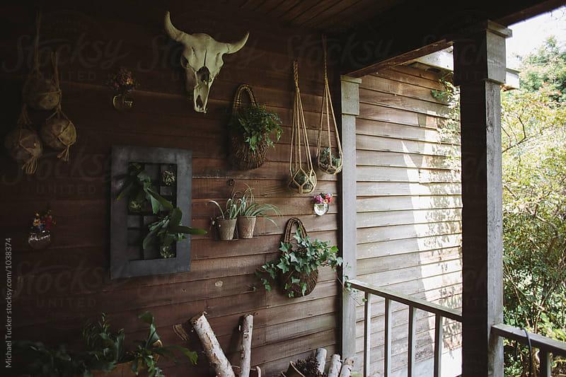 Barn Plants by Michael Tucker for Stocksy United