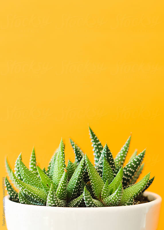 Succulent Plant by Taylor Kampa for Stocksy United