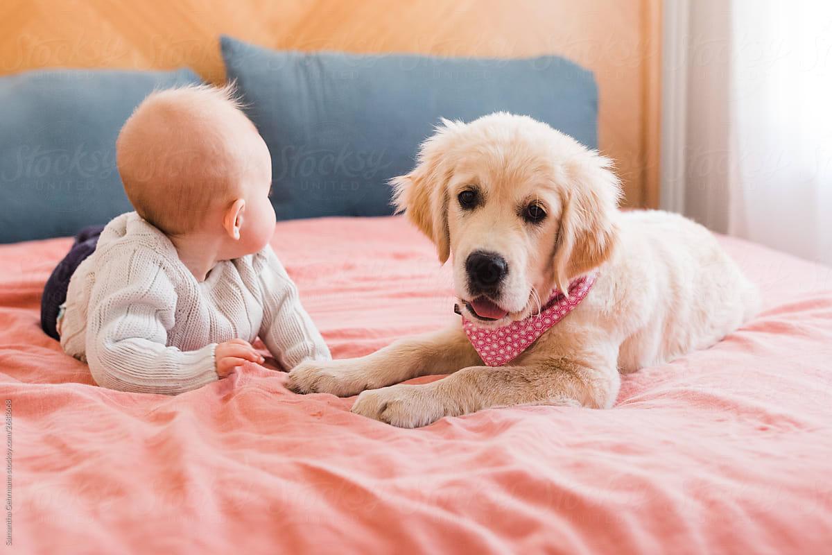 Baby And Golden Retriever Puppy By Samantha Gehrmann Stocksy United