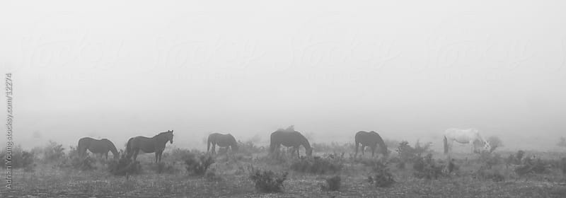 Horses in the Mist by Adrian Young for Stocksy United