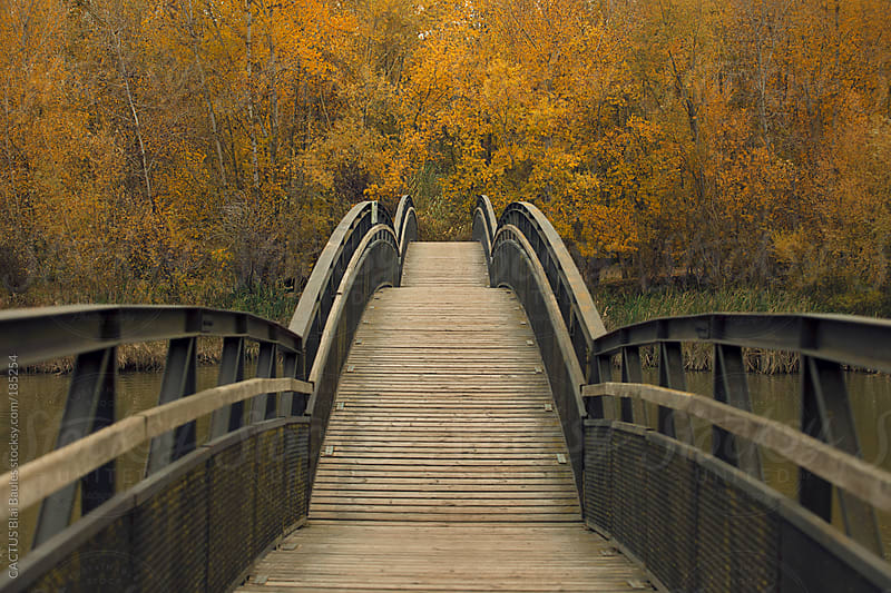 Japanese style bridge over the river with yellow trees in autumn. by CACTUS Blai Baules for Stocksy United
