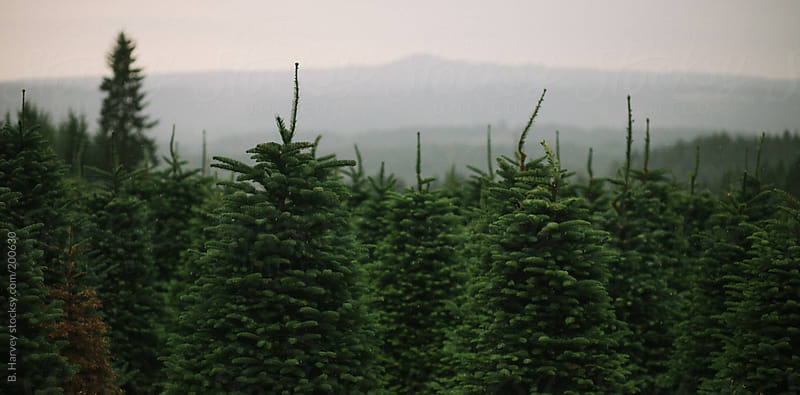 Green Tree Farm in Beautiful Oregon by B. Harvey for Stocksy United