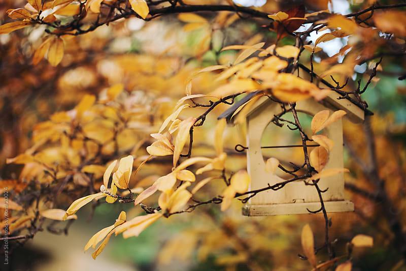 Wooden house shaped birds manger amongst orange leaves on Magnolia shrub by Laura Stolfi for Stocksy United