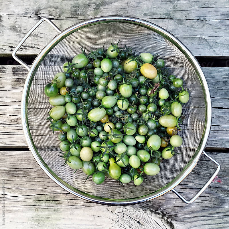 Green cherry tomatoes in a colander by Holly Clark for Stocksy United