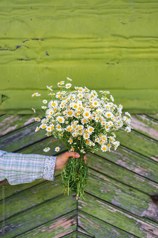 Woman holding camomile bouquet  by Pixel Stories for Stocksy United