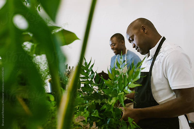 Men prepare plants by Bruce and Rebecca Meissner for Stocksy United
