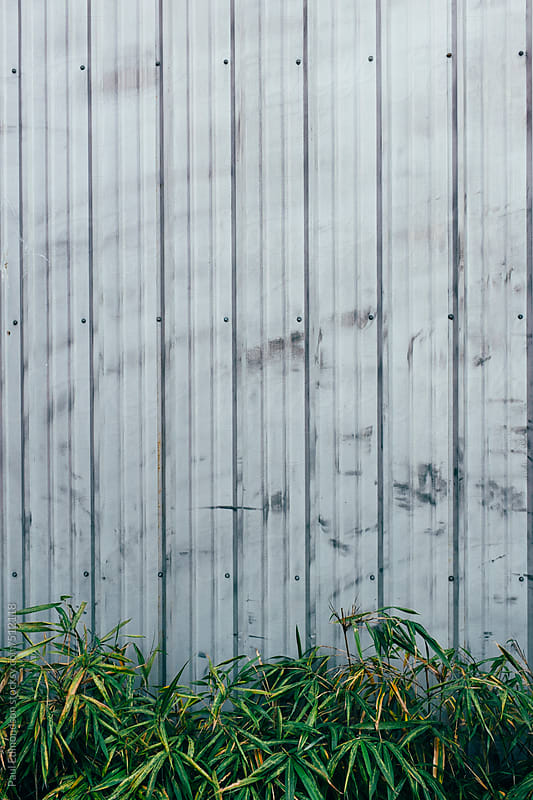 Warehouse wall and bamboo plants in foreground by Paul Edmondson for Stocksy United