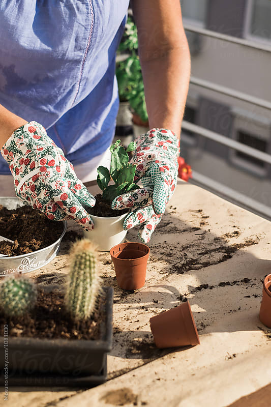 Anonymous Gardener Replanting Succulent by Mosuno for Stocksy United