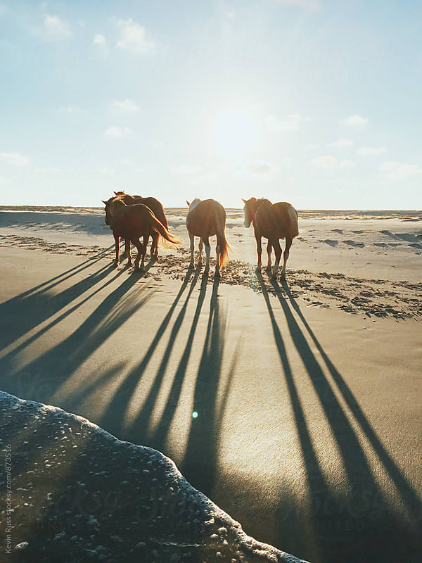 Wild Horses Backlit by Sun on Beach by Kevin Russ for Stocksy United
