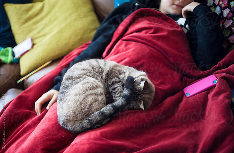 Siamese cat curled up on her human's lap by Carolyn Lagattuta for Stocksy United