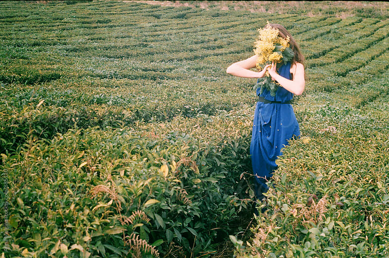 A film photo of a young woman holding bouquet of mimosa on the tea plantation by Anna Malgina for Stocksy United