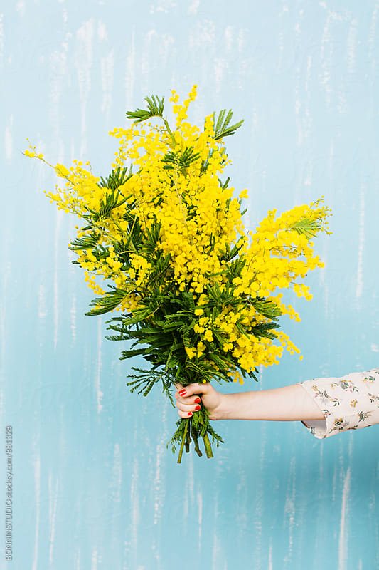 Hand holding a bouquet of yellow flowers on blue wall. by BONNINSTUDIO for Stocksy United