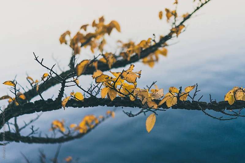 A nice branch with leaves on it by Richard Brown for Stocksy United