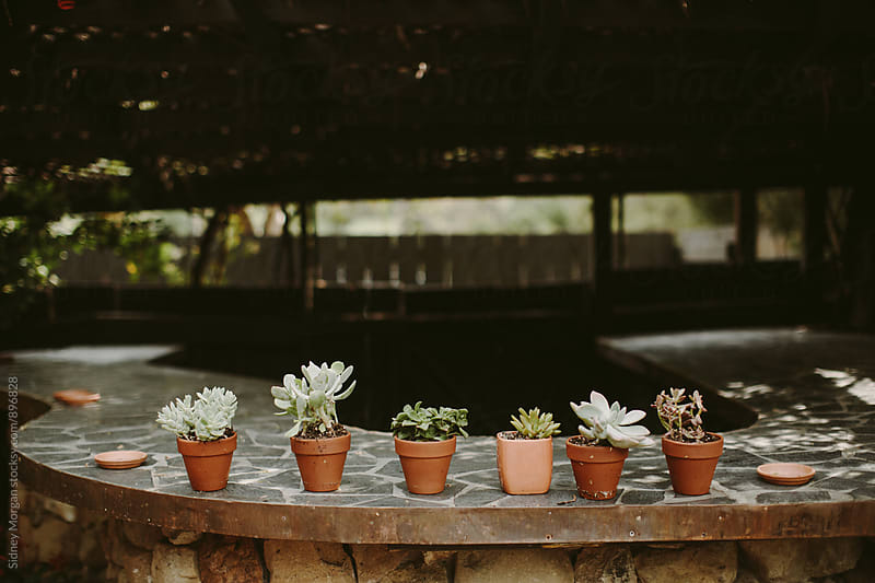Succulents by Sidney Morgan for Stocksy United