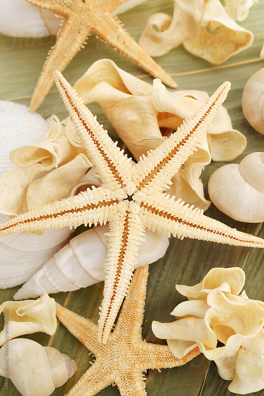 Starfish and Seashells Beach souvenirs by Jasmin Awad for Stocksy United